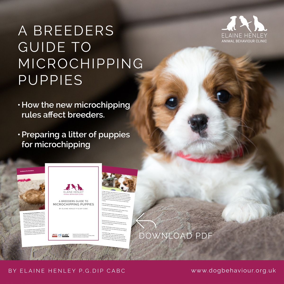 A Breeders Guide To Microchipping Puppies In The UK