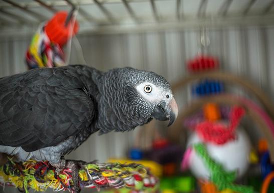 Parrot Behaviourist